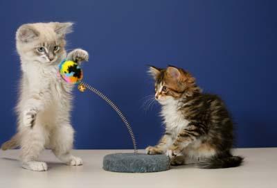 cat-toys-2.jpg