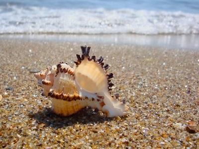 beaches-sea-shell-seashell-sands-ocean-breeze-water-summer-nature-beautiful-coast-beach-shore-hd-background.jpeg