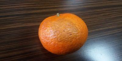 mandarina (1).jpg