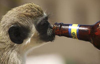 Пияна маймуна.jpg